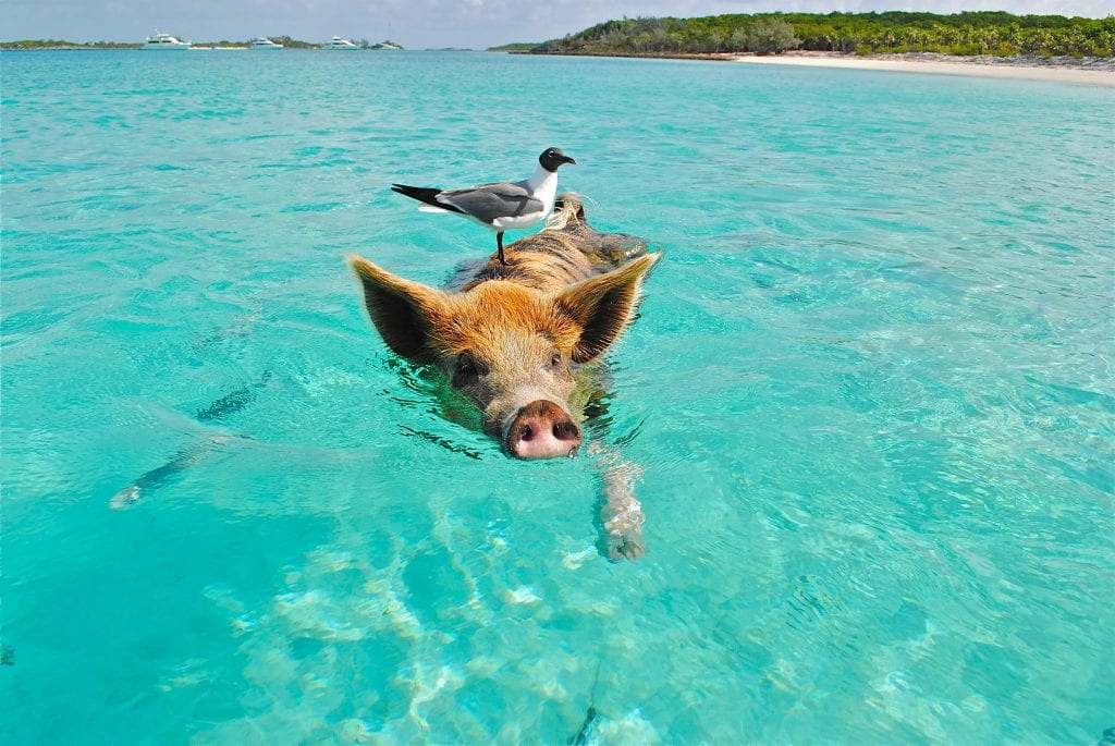 CHARTER: Dreaming BAHAMAS! Book your private yacht